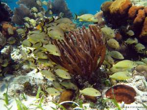 Reef scene. San Pedro, Belize. Canon Ixus 980, WA20 Ikelite. by Bea &amp; Stef Primatesta 